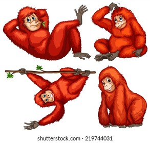 Illustration of orangutans with different poses