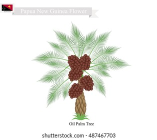 Illustration of Palm oil. The Native Tree of Papua New Guinea.