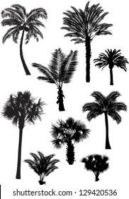 illustration with palm silhouettes isolated on white background