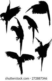 illustration with parrot silhouettes collection isolated on white background