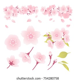 Illustration of parts of cherry blossoms