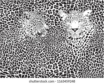 illustration pattern background leopard skins and two heads