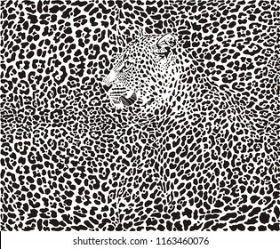 illustration pattern background leopard skins and head
