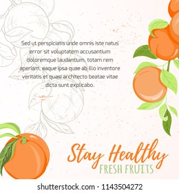 Illustration of peach or apricot fruit on light background. Fruit elements for invitation, menu, advertising, juice, food, cosmetics or health product. Perfect for cards, invitation, banner or website