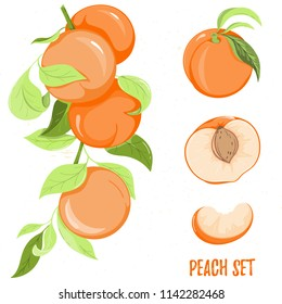 Illustration of peach fruit, isolated on white background. Fruit element for invitations, menu, advertising, juice, food, cosmetics or health products. Perfect for cards, invitation, banner or website