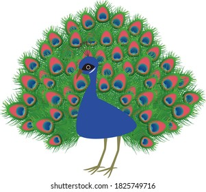 Illustration of a peacock with cute wings spread
