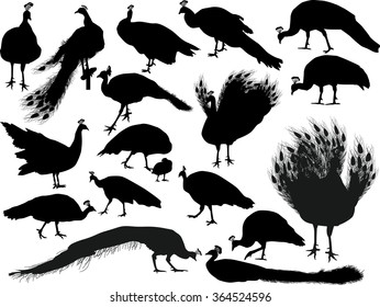 illustration with peacocks silhouettes isolated on white background