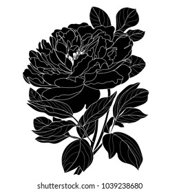 Illustration with peony flower isolated on white background.Vector illustration. Black Silhouette.