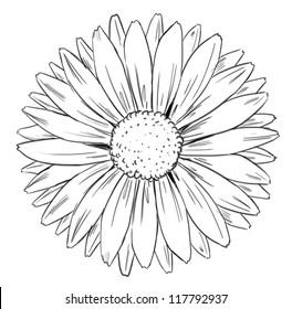 Illustration of petal arrangement of a flower