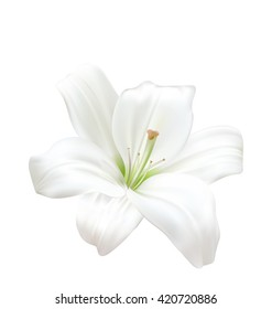 Illustration Photo-realistic Beautiful White Lily Isolated On White Background - Vector