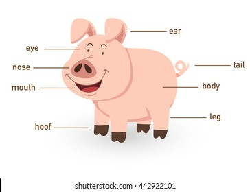 Illustration of pig vocabulary part of body vector