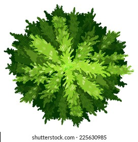 Illustration of a pine tree on a white background