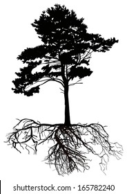 illustration with pine tree silhouette isolated on white background