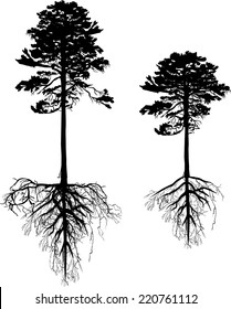 illustration with pine tree silhouettes isolated on white background