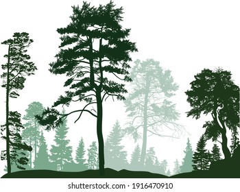 illustration with pine trees forest isolated on white background