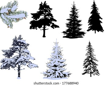 illustration with pines and firs in snow isolated on white background