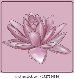 Illustration of a pink lotus. Plants. Flowers. Large water flower. Pink shades. Large lotus of bright color. Minimalistic flower.