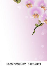 illustration with pink orchid flowers on light background