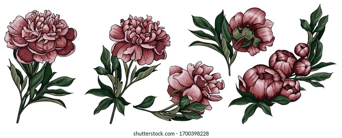 Illustration with pions (leaves, bud, stems and flowers). Flowers for a bouquet. Spring vector set of isolated multicolored compositions on white background. Saturated color for your holiday design.