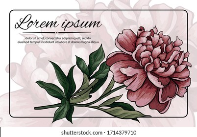 Illustration with pions (leaves, bud, stems and flowers). Vector business card with multicolored pion. Template for greeting card. Saturated color for your holiday design.