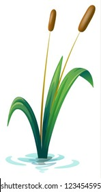 3414 Cat Tail Cat Tail Plant Images Royalty Free Stock Photos On