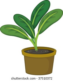 illustration of plant in a pot on white