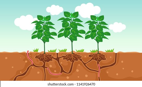 Illustration of Plants and the Air and Water Passage In the Soil Created by Worms