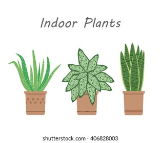 Illustration of plants. Aloe, snake plants, chinese evergreen in the pots. Illustration of houseplants, indoor and office plants in the pot. Vector illustration.