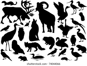 illustration with polar animals collection isolated on white background