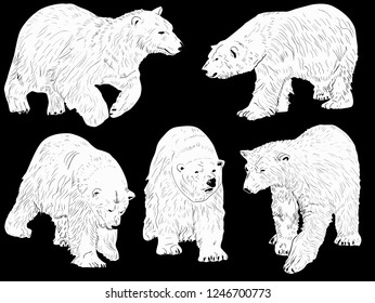 illustration with polar bears isolated on black background