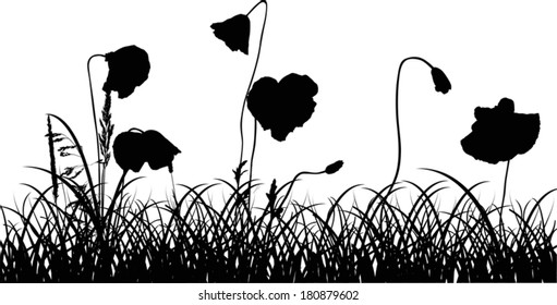 illustration with poppy flowers in black grass isolated on white background