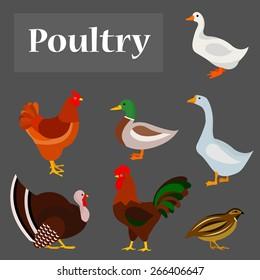 Illustration of poultry: goose, hen, drake, white duck, gobbler, quail.