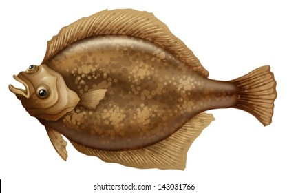 Illustration of the Psettodes Erumei Flounder