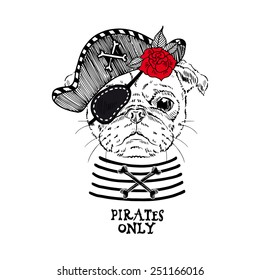 illustration of pug pirate