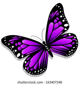 Illustration of a purple butterfly on a white background