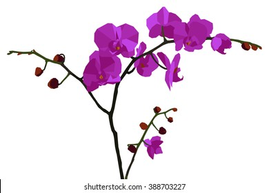Illustration with purple orchid.