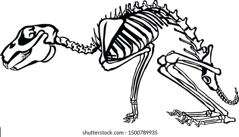 Illustration of a Rabbit skeletal system on a white background.