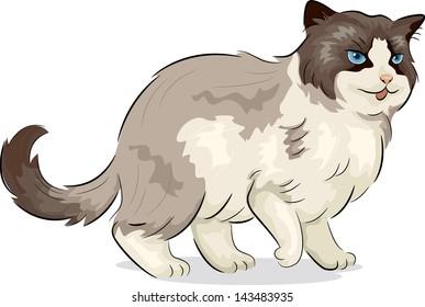 Illustration of a Ragdoll Cat