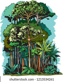 Illustration of Rain forest layers