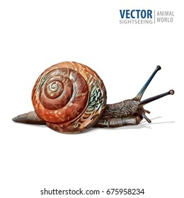 Illustration of realistic. Garden snail. Vector isolated on white background.