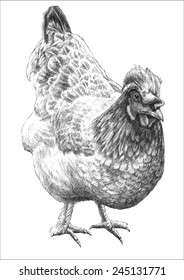 illustration with realistic hen. hand draw