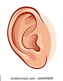 Illustration of realistic human ear isolated on white.