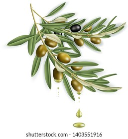 Illustration of realistic olive tree branches with olive oil drops isolated