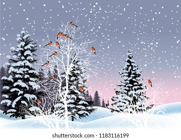 illustration with red bullfinches in winter fir forest