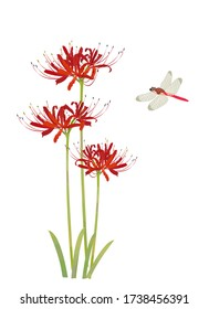 Illustration of red spider lily and dragonfly.