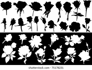 illustration with rose flower white and black silhouettes collection