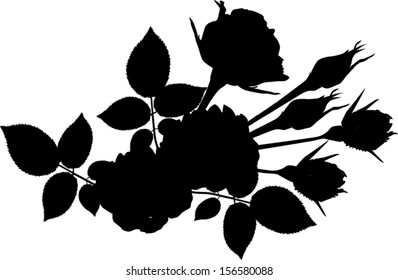 illustration with rose silhouette isolated on white background