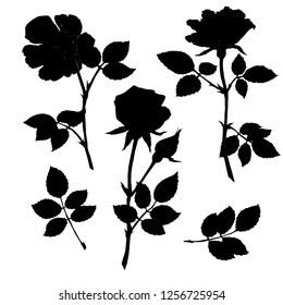 Illustration of roses flowers, drawn by hand.  Drawing ink . Silhouette. Design elements for invitations, wedding greeting cards, announcements.