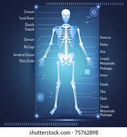 illustration of scanning of human anatomy showing skelton with labels of all bones