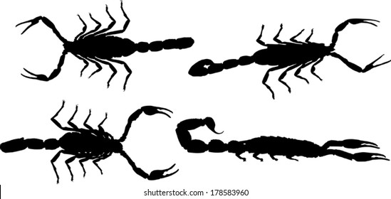 illustration with scorpion collection isolated on white background
